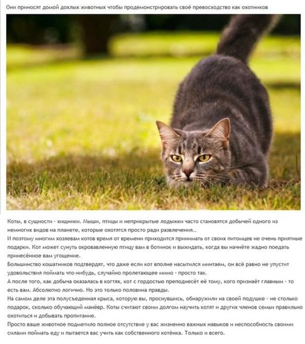 Повадки котов и кошек: что они означают, привычки и психология животных