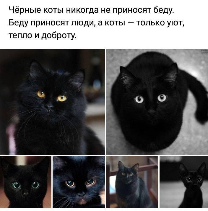 """""""таро черных котов"""": значение и особенности"""