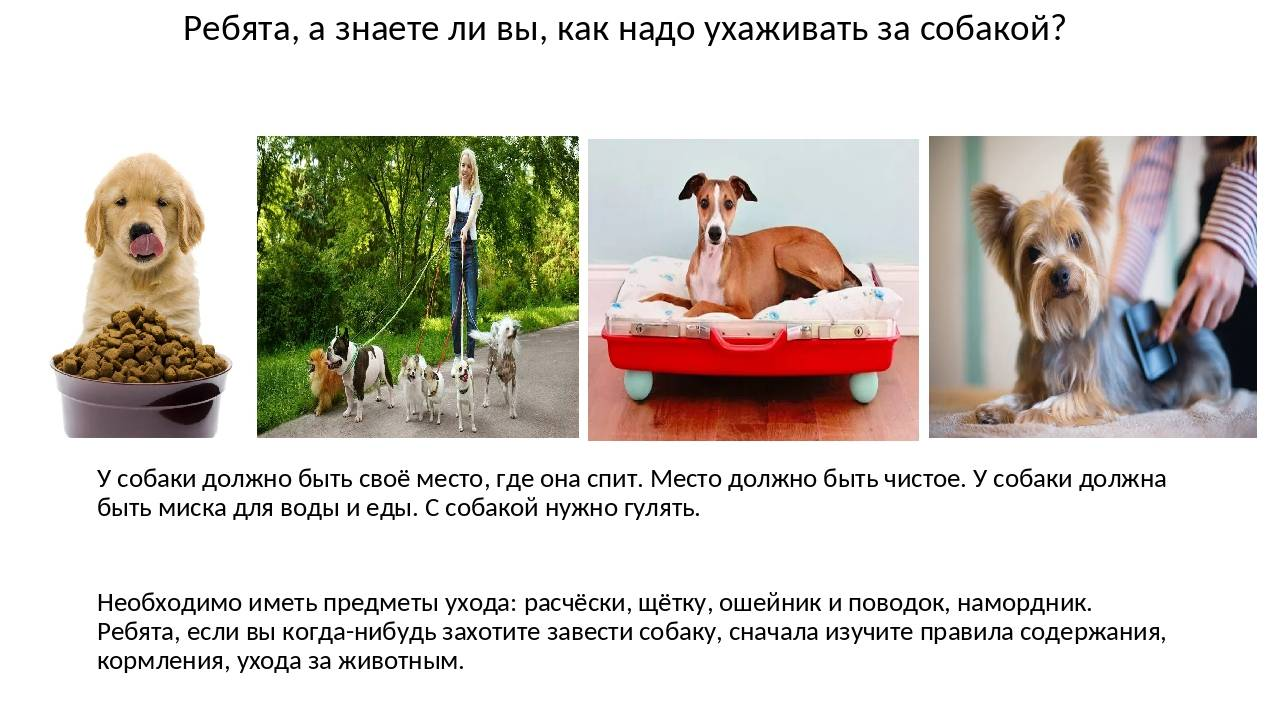 Как работает чесалка для собак фурминатор и как правильно ей пользоваться