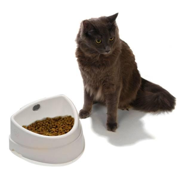 Смешанное кормление для вашей кошки