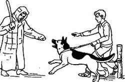 Как научить собаку ходить рядом и стать идеальным городским жителем. обучаем собаку команде «рядом» без поводка