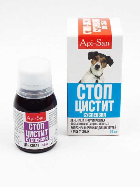 Стоматит у собак — симптомы, лечение и профилактика заболевания