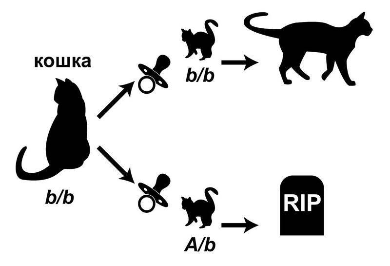 Хпн у кошек и собак. лечение