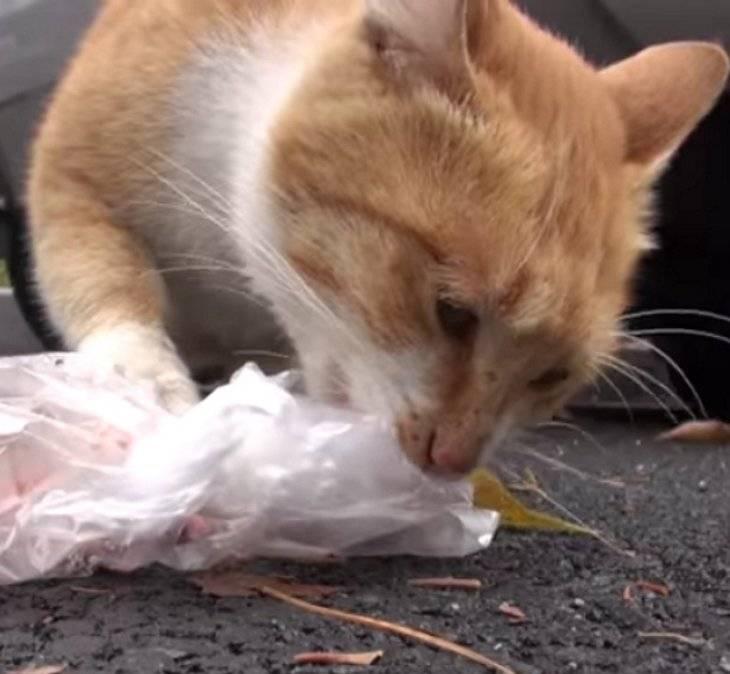 Кот съел пакет - что делать, советы врача