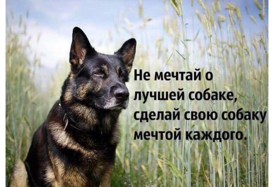 Как понять, кого собака выбрала хозяином: определяем лидера в семье