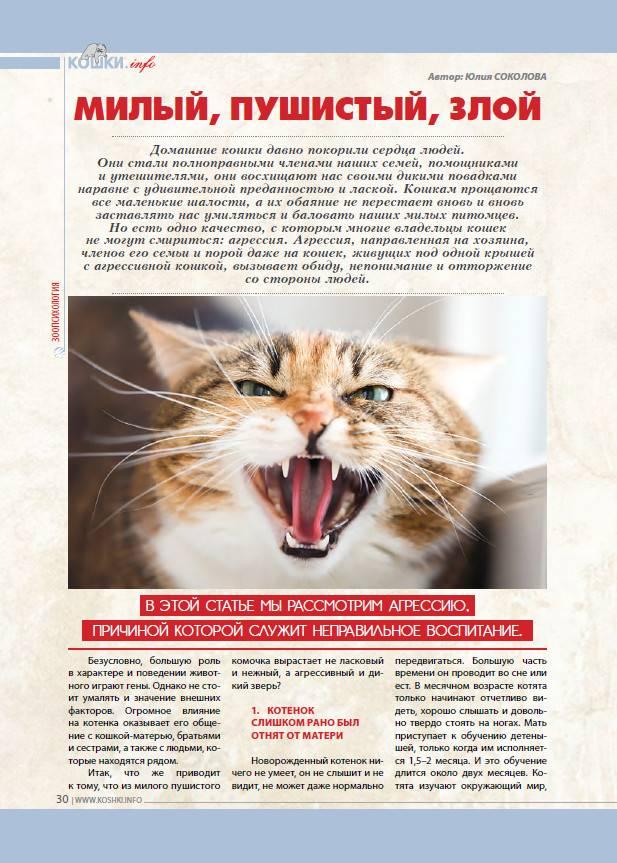 Кошки, несущие смерть. чем эти домашние животные опасны для человека | cвободное время | аиф аргументы и факты в беларуси