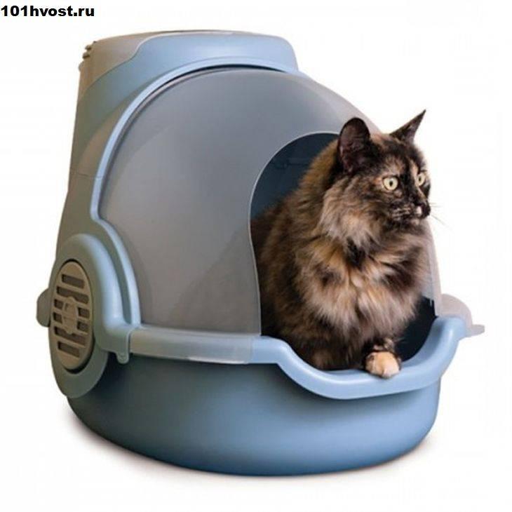 Как пользоваться лотком для кошек: с решеткой, как заполнять и мыть, как правильно убирать наполнитель и как часто его нужно менять