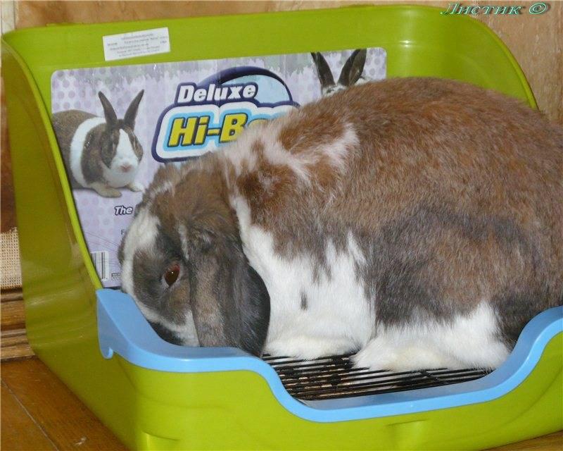 Как приучить кролика к лотку: проверенные методы