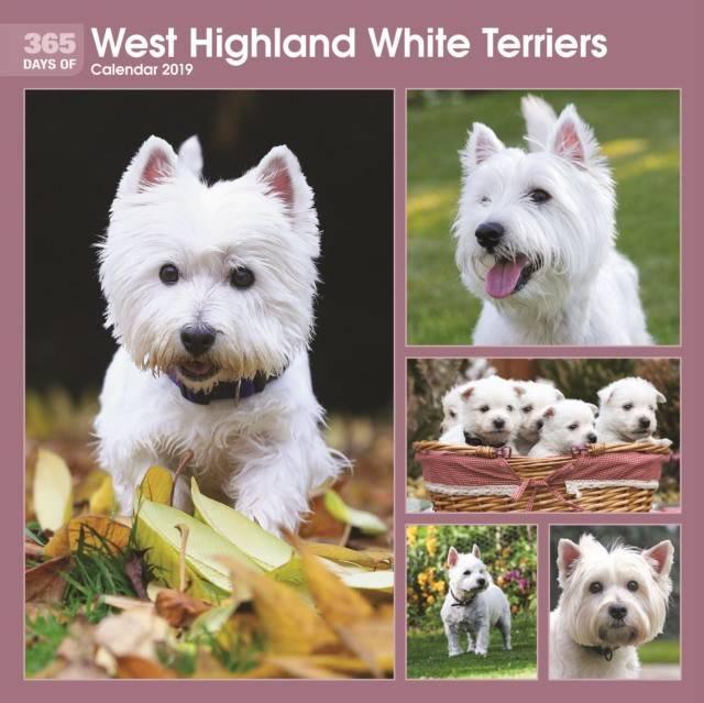 Резвый белоснежный шотландец – вест-хайленд-уайт-терьер