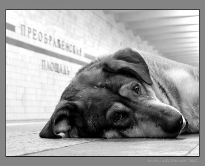 Умеют ли собаки плакать и как понять что у пса текут слезы от эмоций