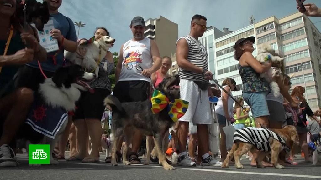 Карнавал для собак в Рио
