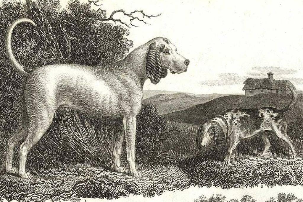 Исчезнувшие породы собак - секреты домашнего груминга
