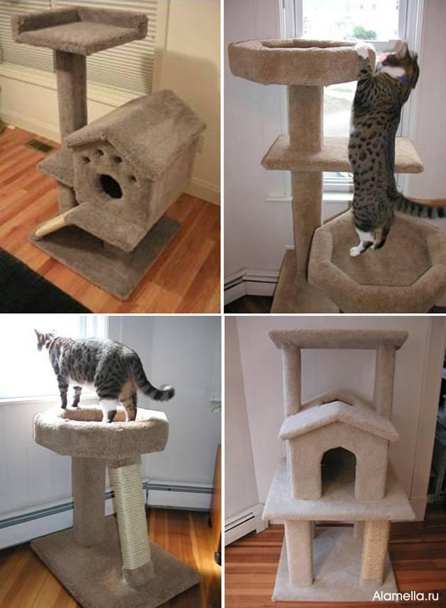 Как приучить кошку к новому дому? как адаптировать немолодого кота к новому месту жительства? сколько нужно времени для привыкания котенка?