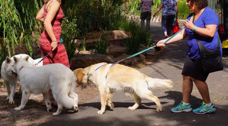 Как научить собаку команде «фу!»