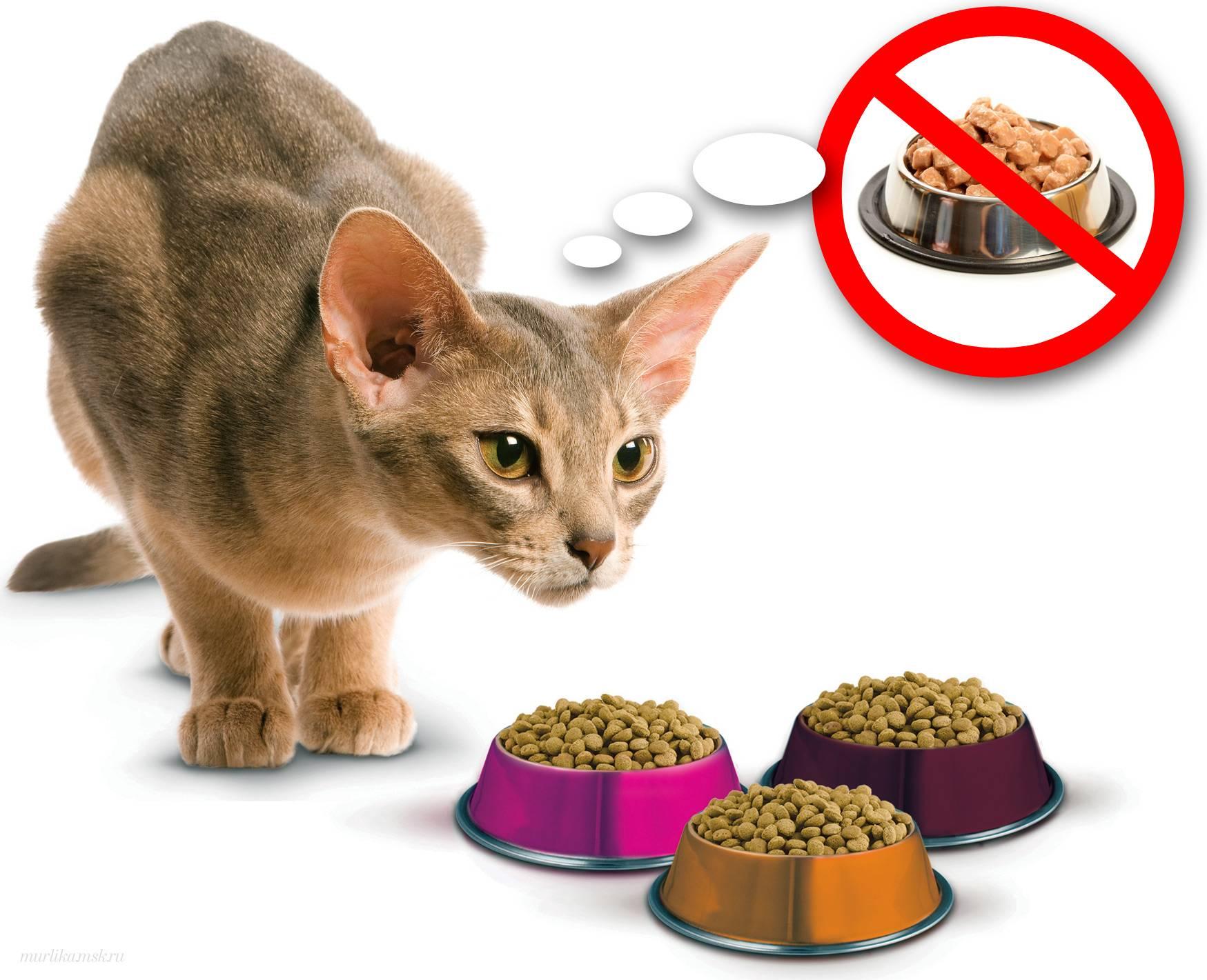 Что делать, если кошка не ест