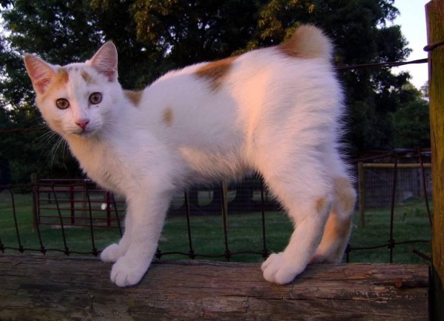 9 самых ласковых и добрых пород кошек, которые подходят для детей