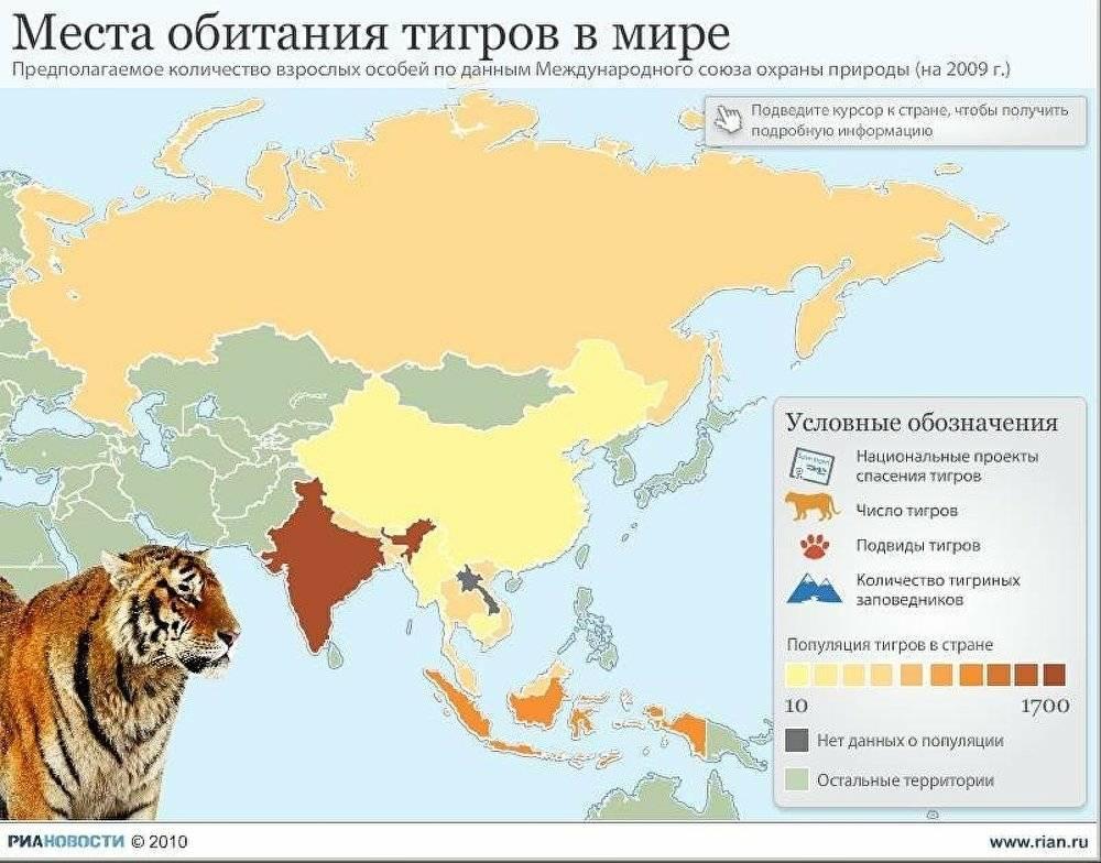 Золотая кошка: описание, характер, среда обитания и образ жизни, фото