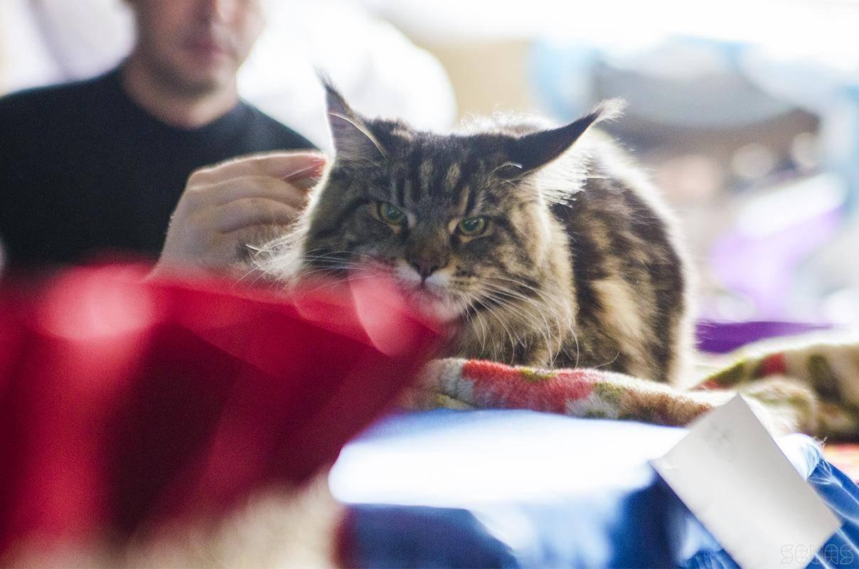 Всемирный день кошек в 2019 г.: какого числа отмечают, история праздника в 2021 году