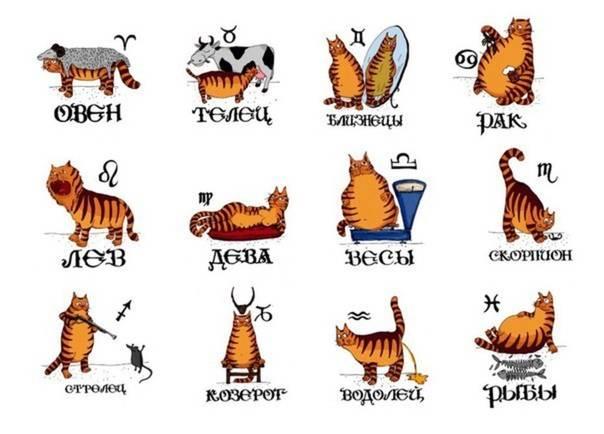 Животные по знакам зодиака: кому какие подходят - gafki.ru