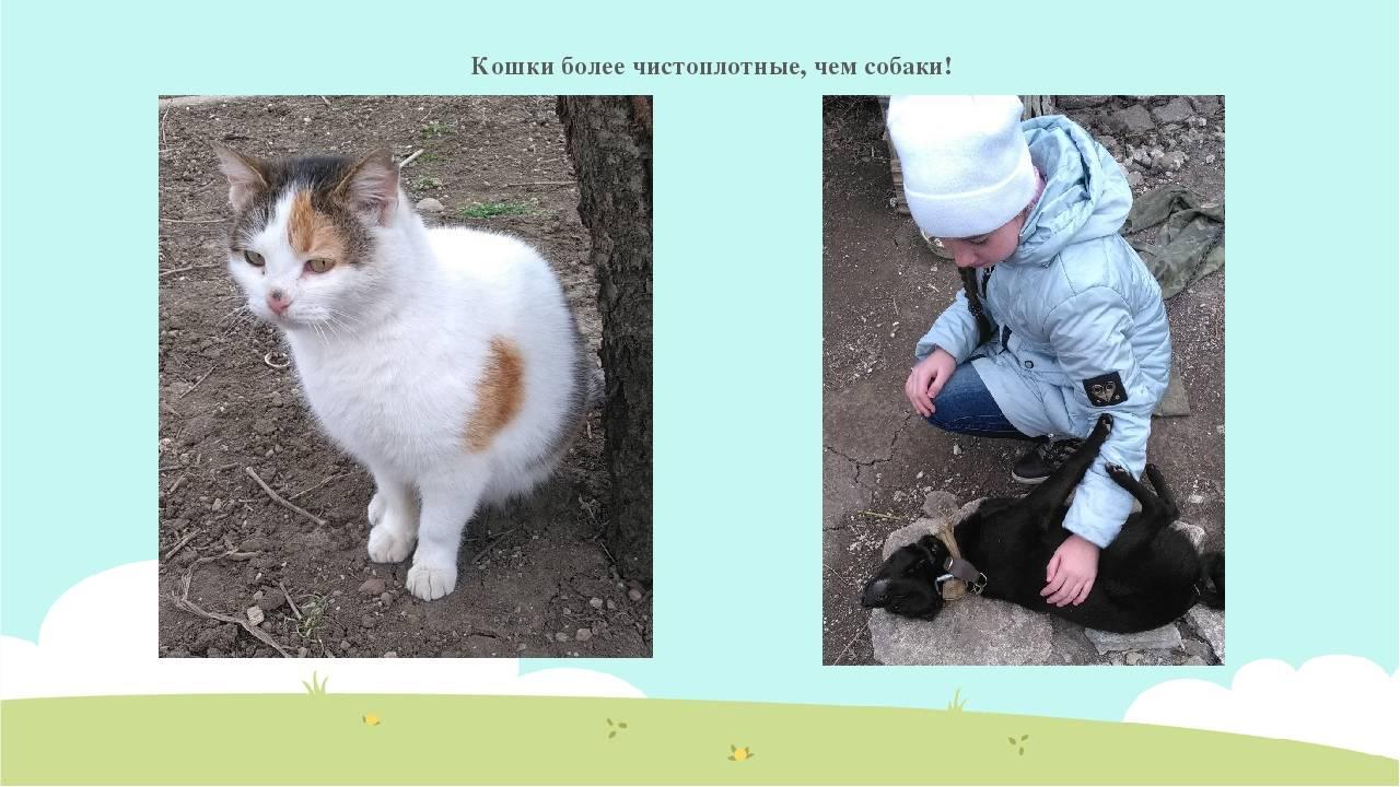 Кошки как собаки: 9 пород с «собачьим» характером