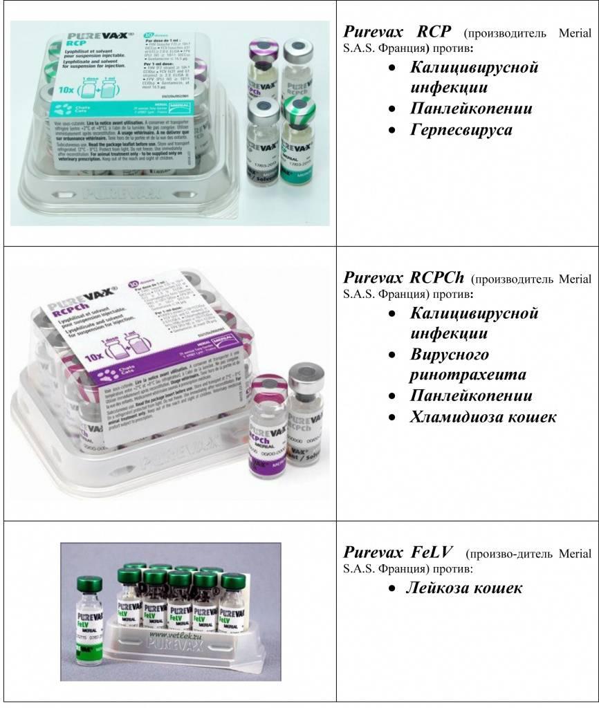 Вакцина пуревакс для кошек - инструкция по применению - kotiko.ru
