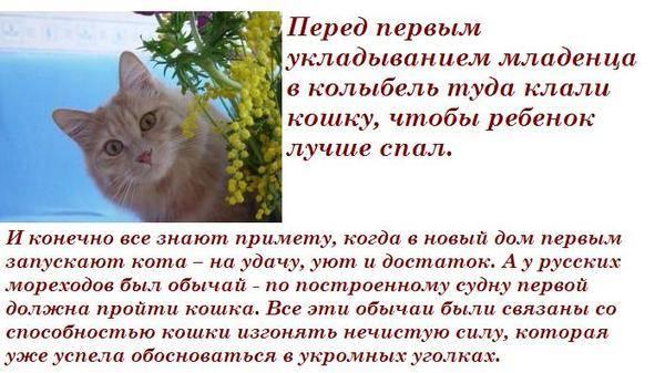 Как адаптировать кошку или кота к новому дому или квартире | жилью
