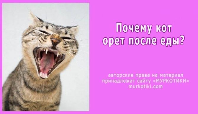 Почему кот (кошка) орет по ночам в квартире? причины мяуканья, что делать?