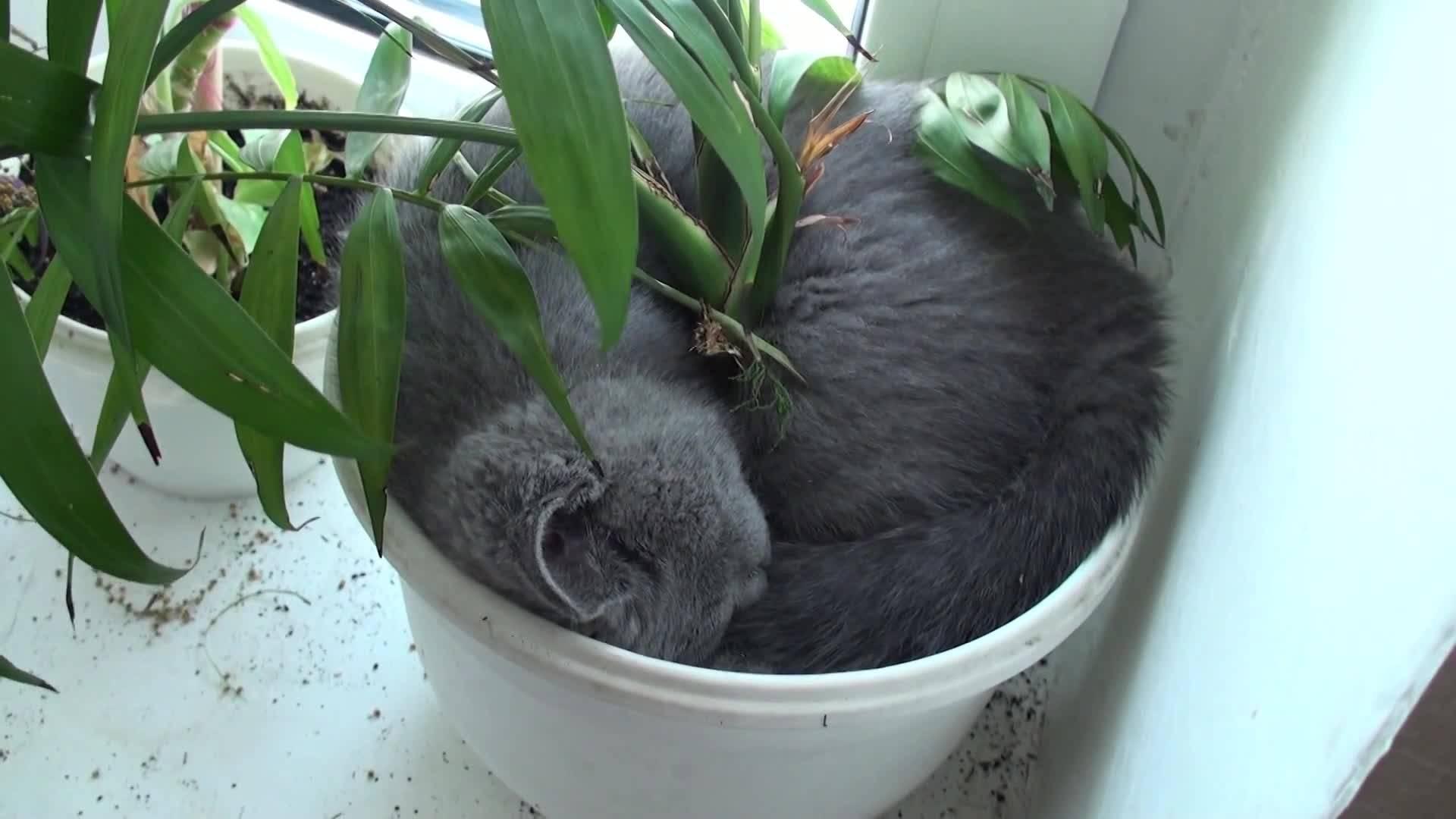 Как защитить комнатные растения от кошки? — ботаничка.ru