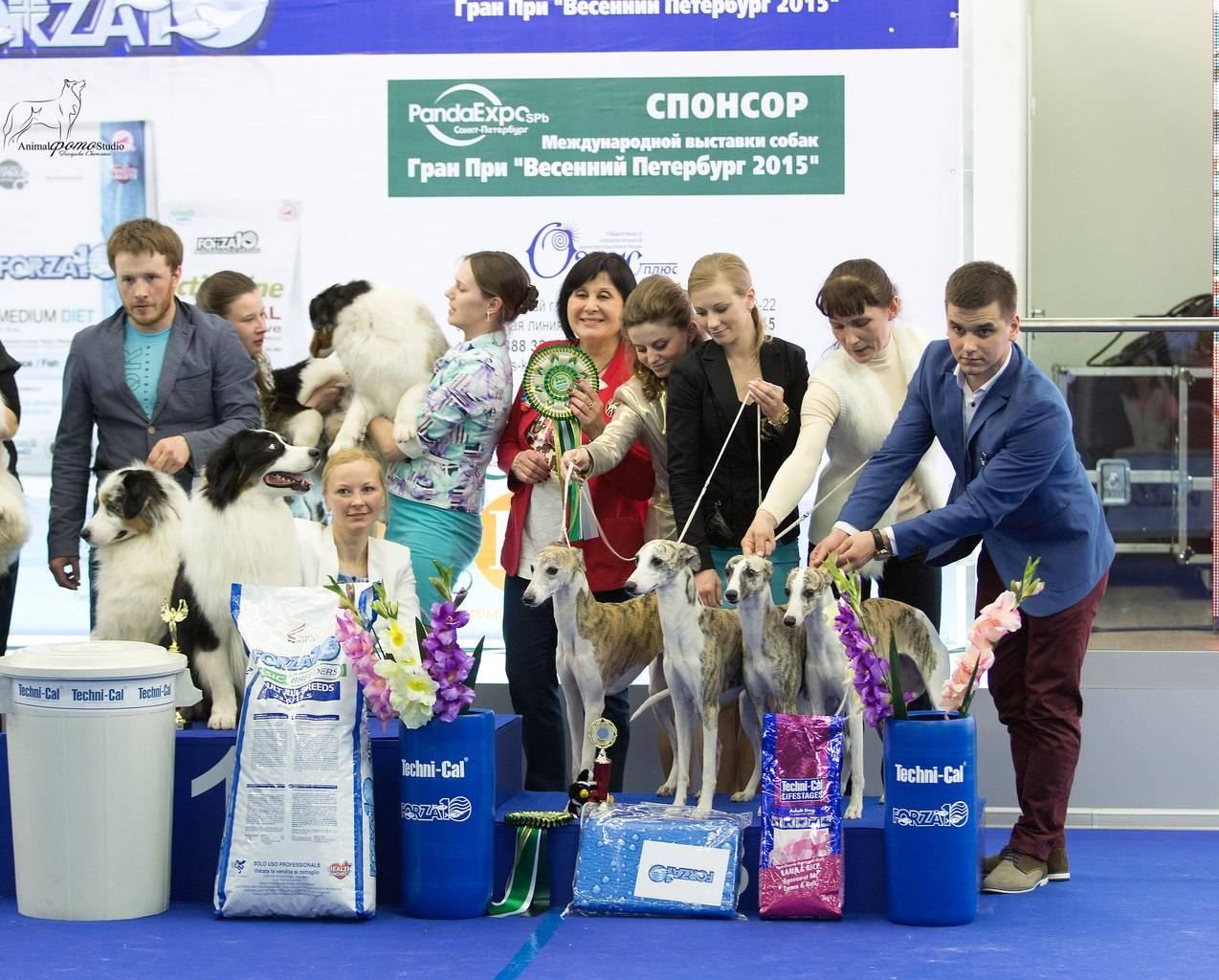 Международная выставка собак ранга cacib-iku г. москва «континент союз 2021»