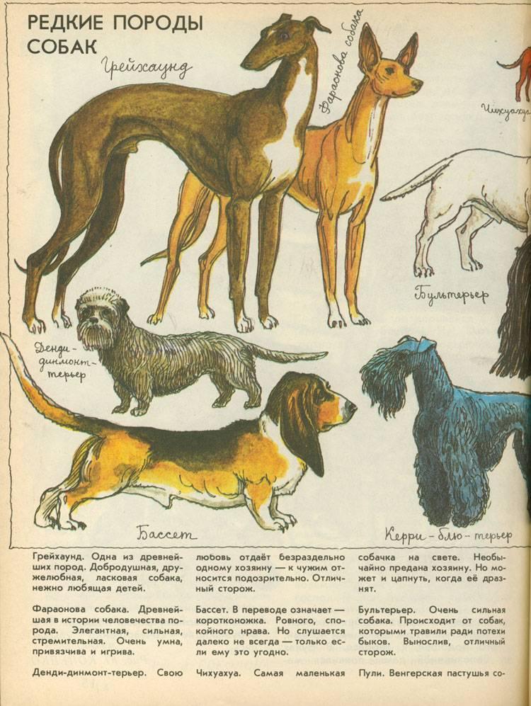 Породы собак с фото и названиями. фотографии и описания пород собак.