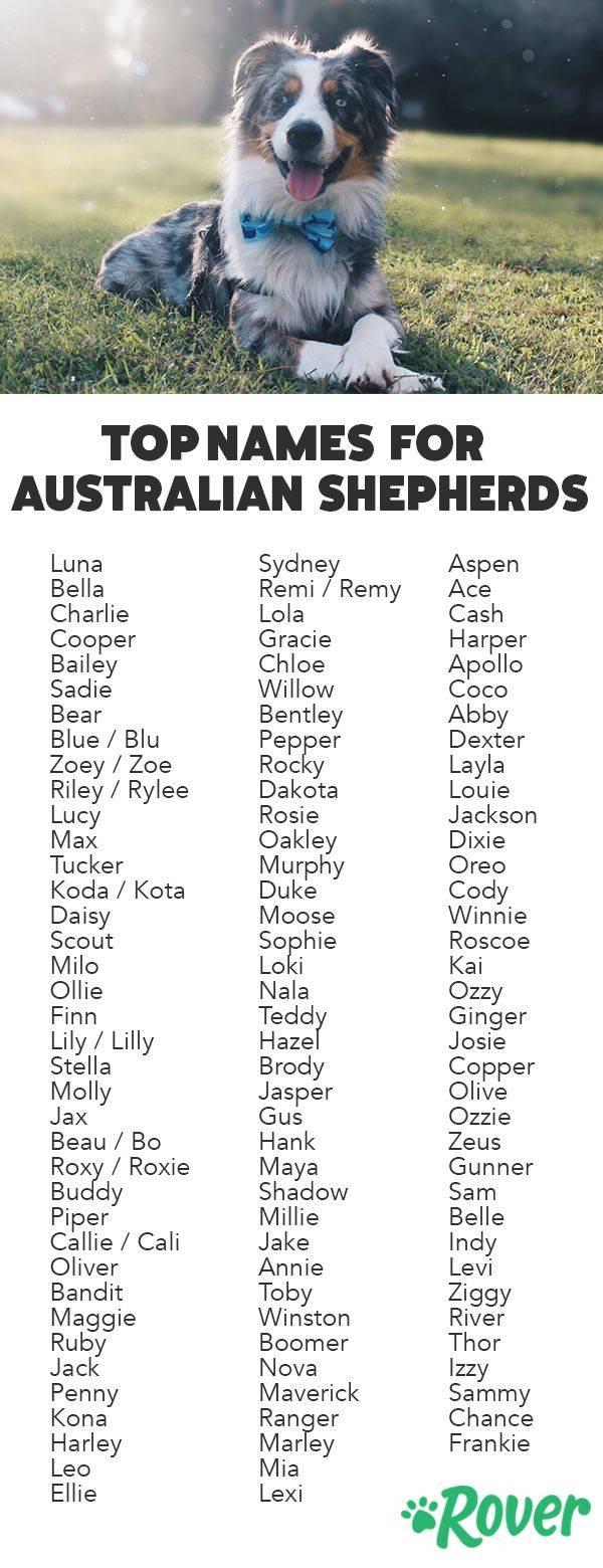 Клички для собак-«девочек»: как назвать питомца крупной имелкой породы, список иностранных ирусских имен для щенков + отзывы