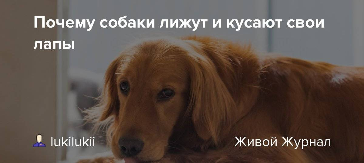Что делать, если собака грызет свой хвост до крови?