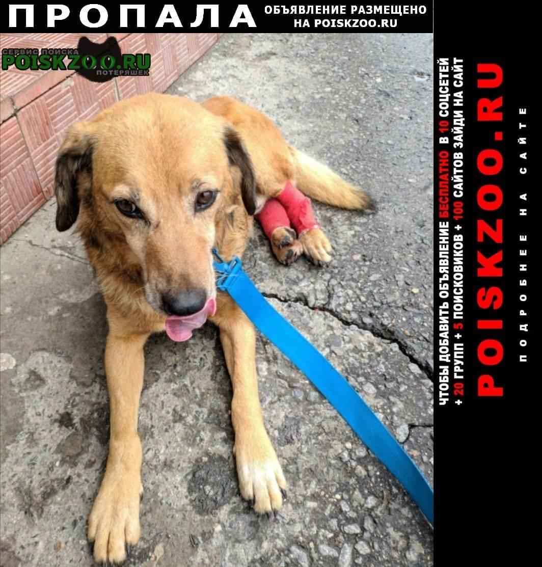 "Собака после наркоза: уход, осложнения | блог ветклиники ""беланта"""