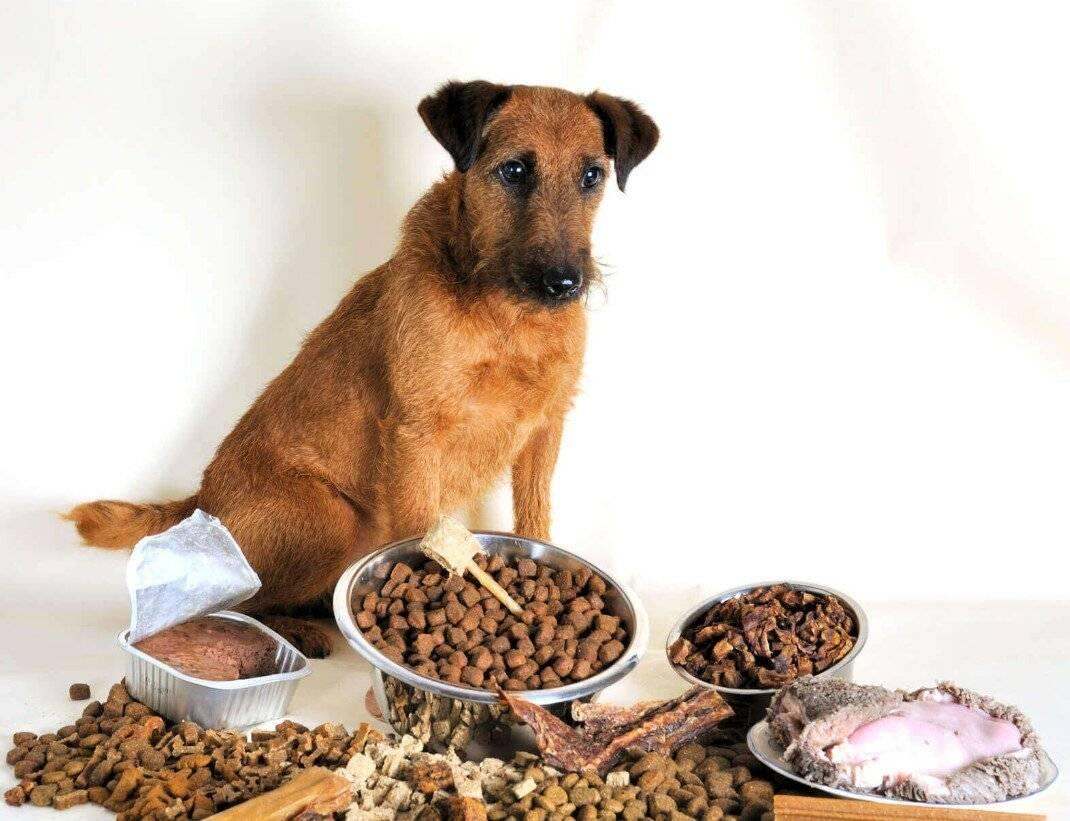 Рацион собаки на сухом корме