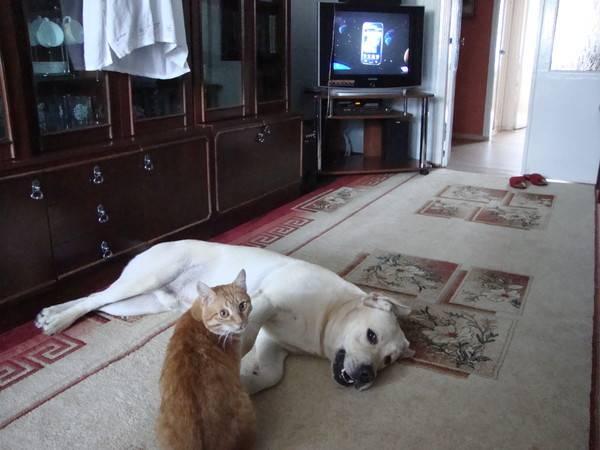Кого лучше всего завести для содержания в квартире — кота или собаку