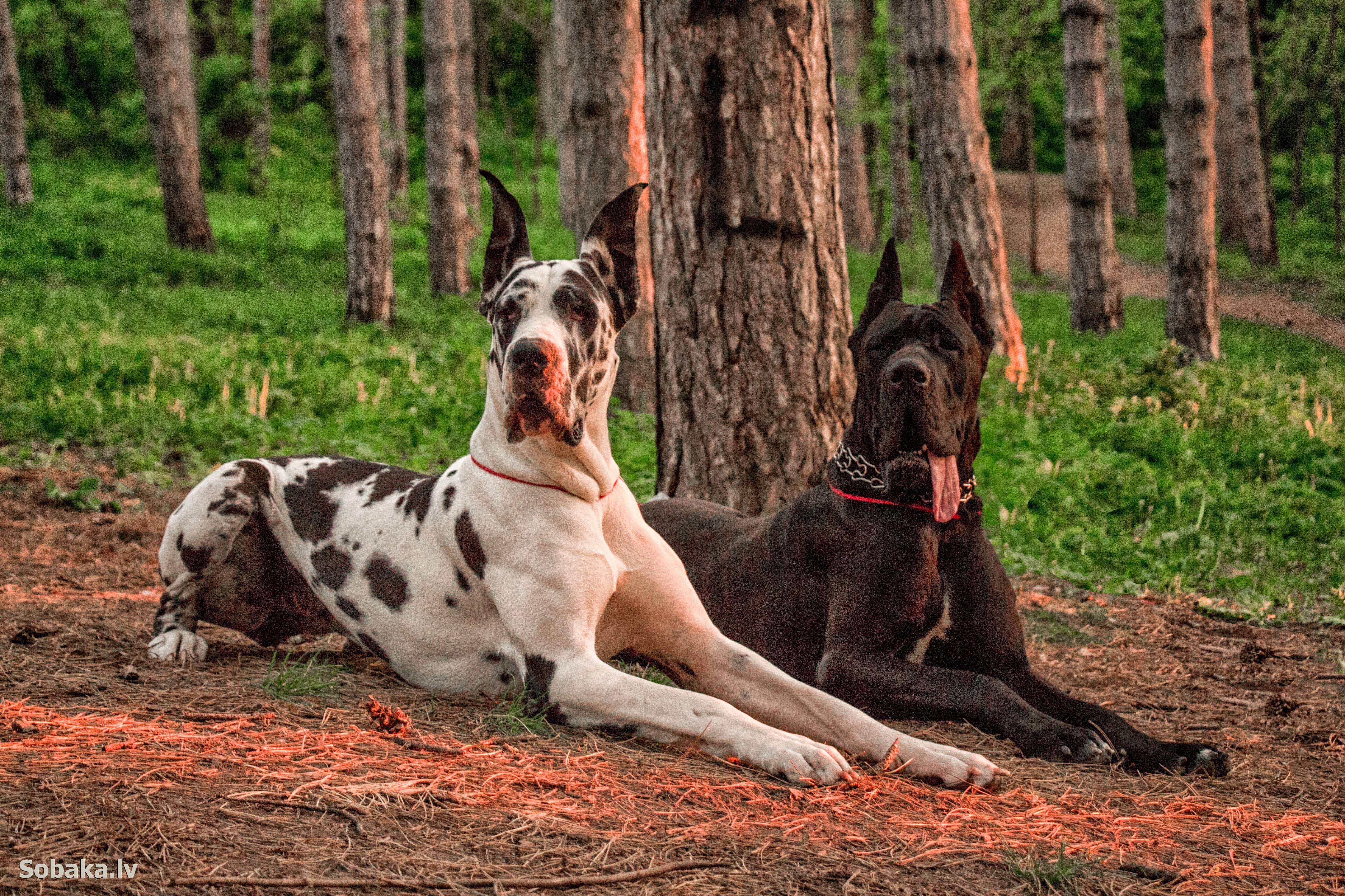 Топ-10 самых красивых пород собак в мире: рейтинг на фото