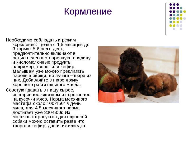 Чем кормить щенка от 1 месяца и до года - моя собака