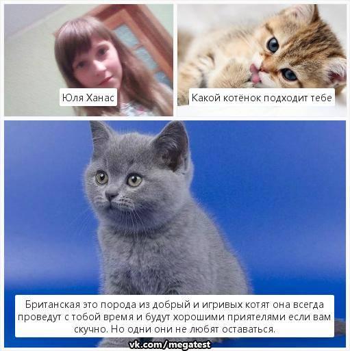 Как правильно выбрать котенка | мальчика и девочку