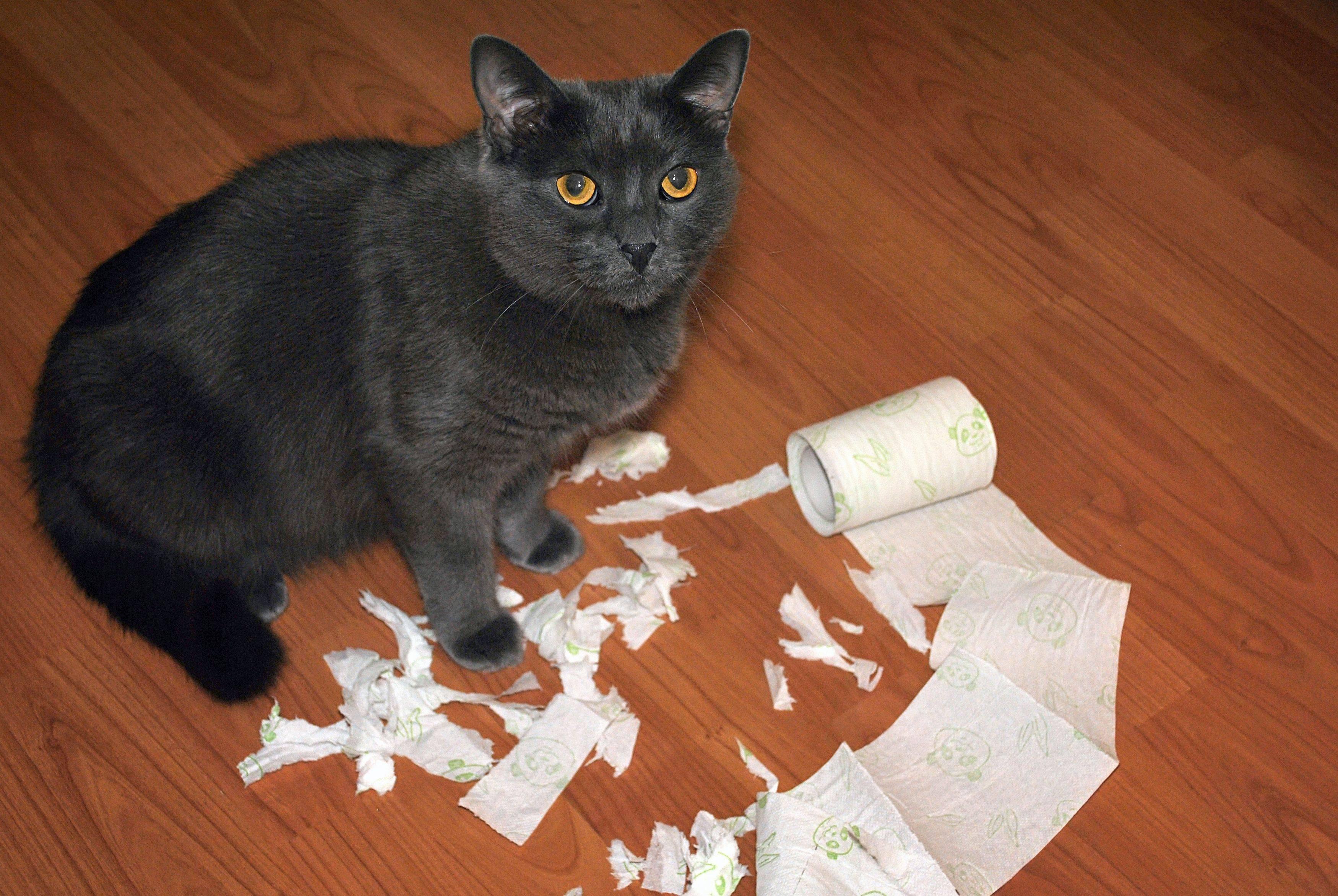 Можно ли за баловство наказывать котенка, как правильно наказать, чтобы он понял?