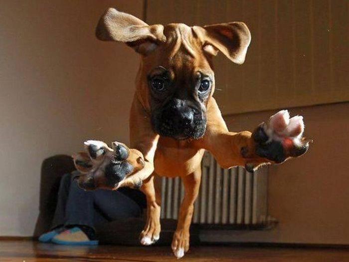 Смешные породы собак с фотографиями и названиями | petguru