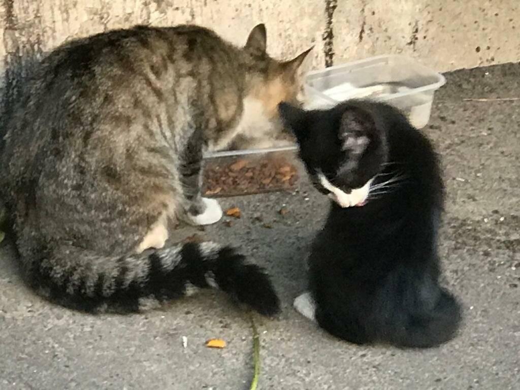 Как приручить кошку и приучить дикого котенка к рукам и ласке