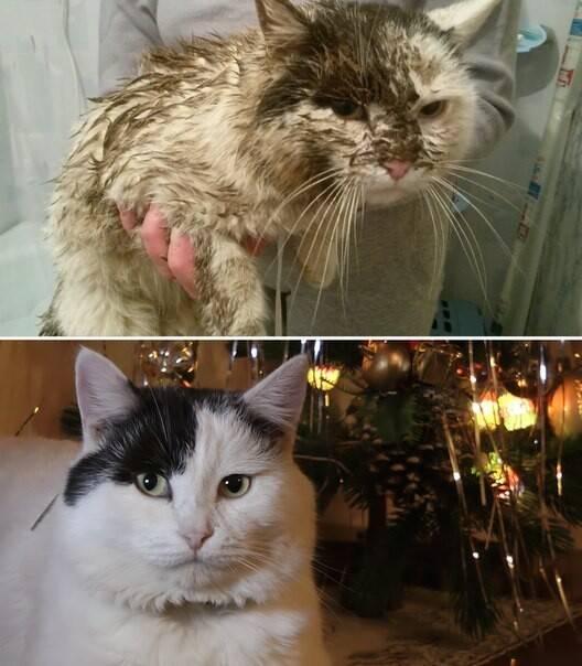 Кровь в моче у кошки: что делать, причины и лечение