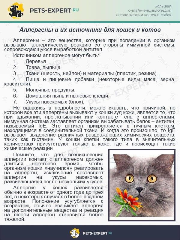 Почему кошка кашляет?