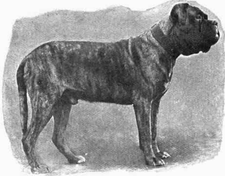 Их лучше не дразнить: 11 самых опасных пород собак