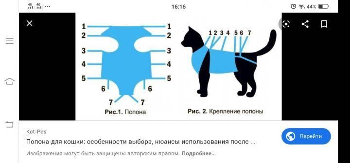 Попона для кошки своими руками: использование подручных материалов и самостоятельно изготовление бандажа