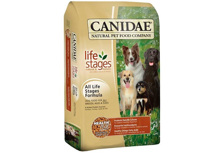 Кормление пожилых собак: корм для мелких, средних и крупных пород, особенности питания сухой и натуральной пищей, а также ее состав