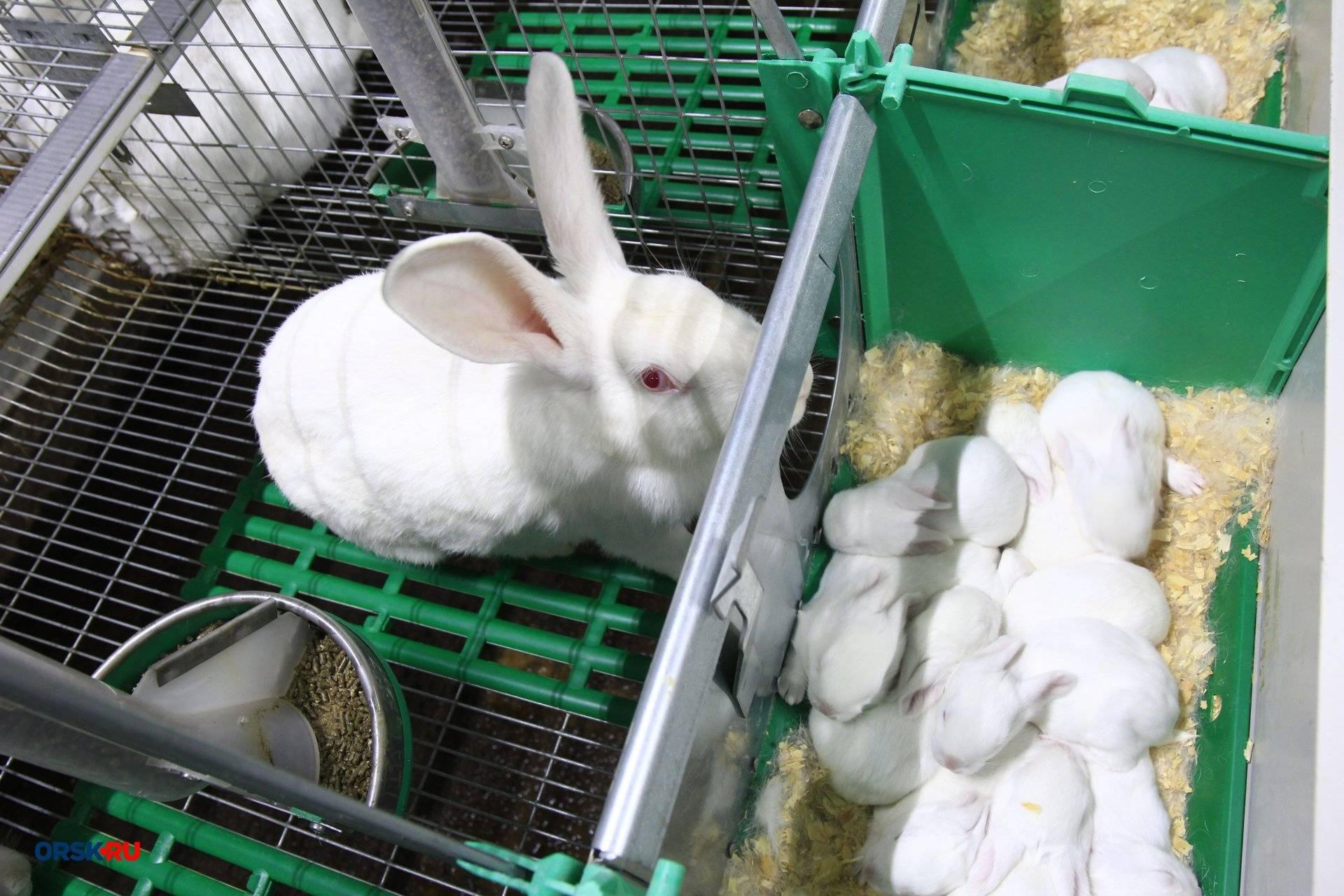 Разведение кроликов в домашних условиях. основные методы содержания | cельхозпортал