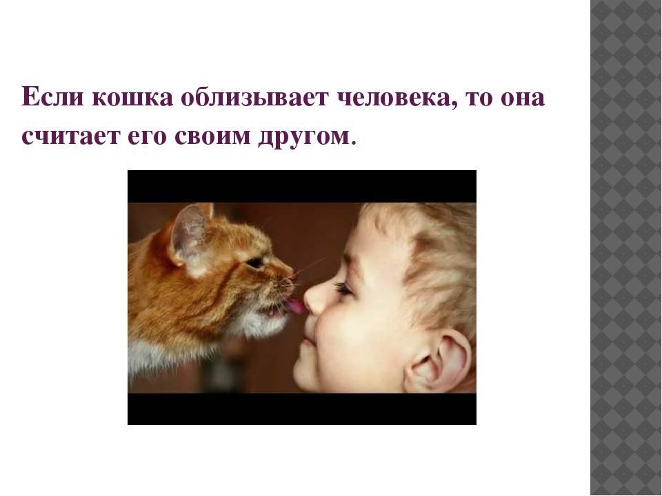 Кошка лижет руки и лицо у человека: причины, отучение кошка лижет руки и лицо у человека: причины, отучение