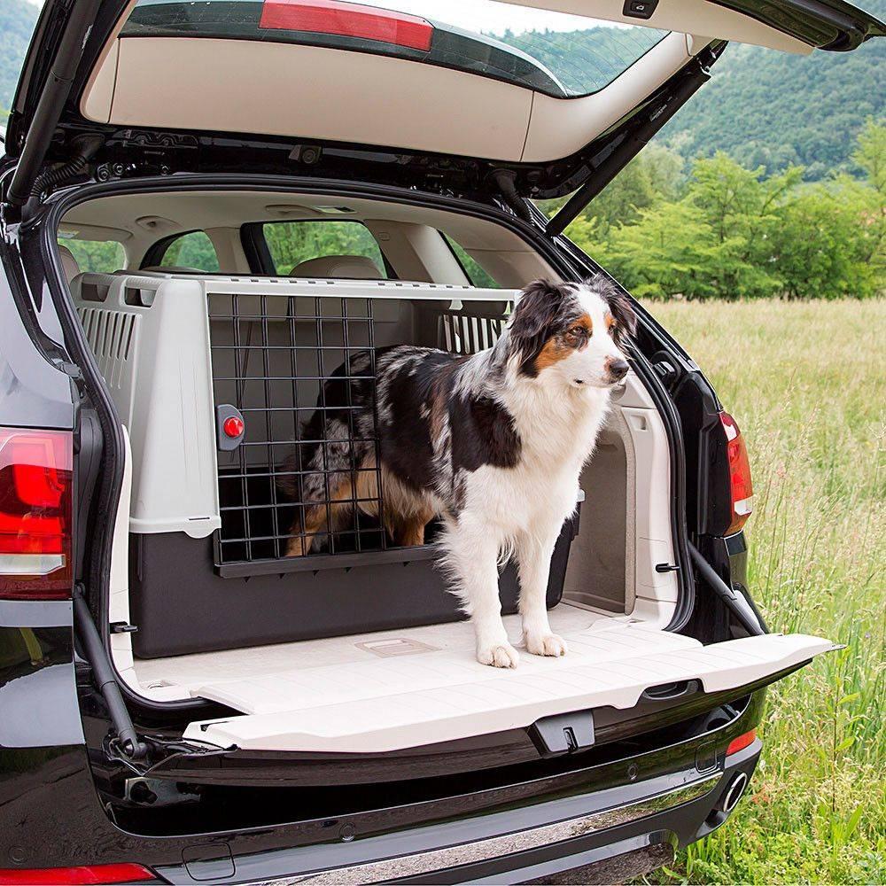 Перевозка собак в машине — как везти большого пса, на длинные расстояния
