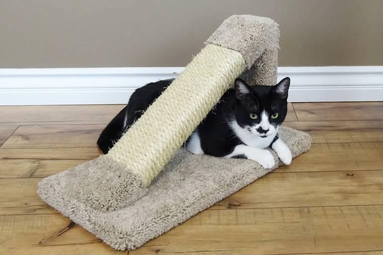 Как приучить кота или кошку к когтеточке, в том числе, в виде домика: особенности приучения котят и взрослых животных, рекомендации и отзывы